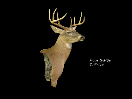 north carolina deer taxidermy