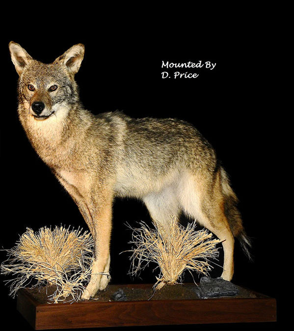 Caring for Taxidermy at Home: Tips from the Experts